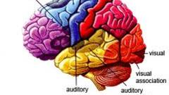 https://coursera-course-photos.s3.amazonaws.com/8b/337444f603516aa5f5310afc17fdae/V-multicoloured-brain.jpg